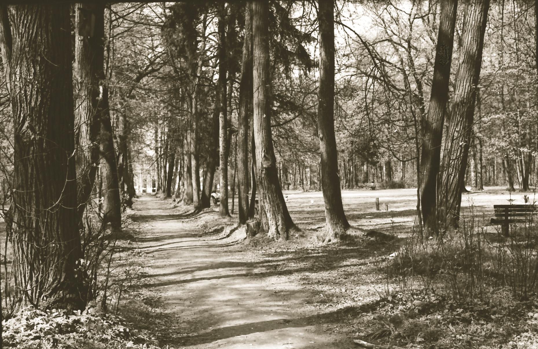 Рельефы Царицынского парка
